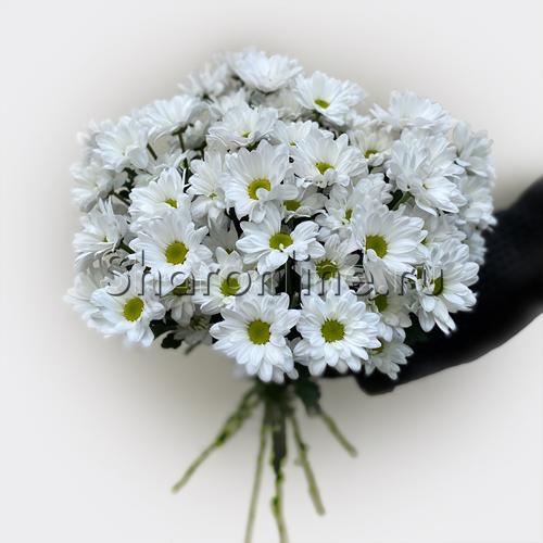 Фото №1: Букет белых хризантем