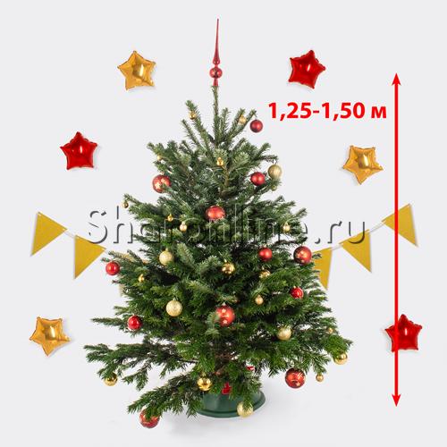 Фото №2: Датская живая ель (елка) 1,25 м-1,50 м