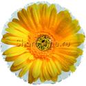 "Фото №1: Шар Круг ""Гербера"" желтый 46 см"